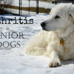 Fitness For Senior Dogs With Arthritis