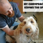 Animal Chiropractors Help With Fitness