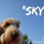 GBGV-sky-carousel