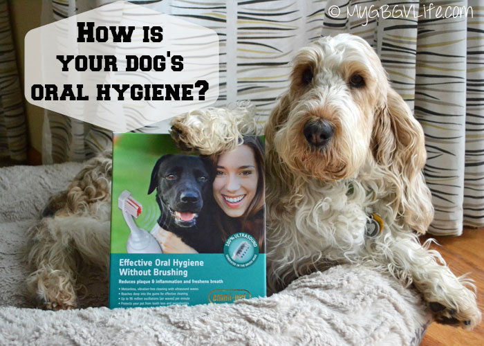 Revolutionary Dog Dental Care With Emmi-Pet {Giveaway}