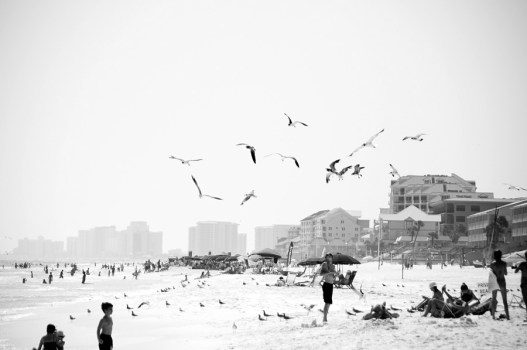 destin beach and the gulls
