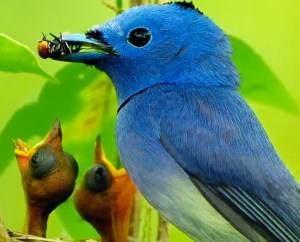 Birds teaser