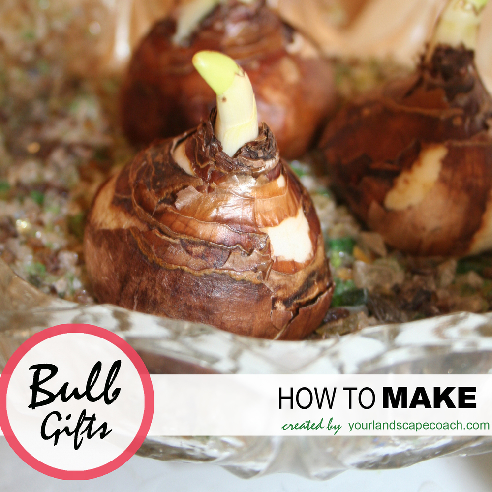 How to make bulb gifts. Gifts from the garden.