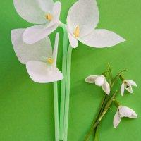 Snowdrop Tissue Paper Flowers