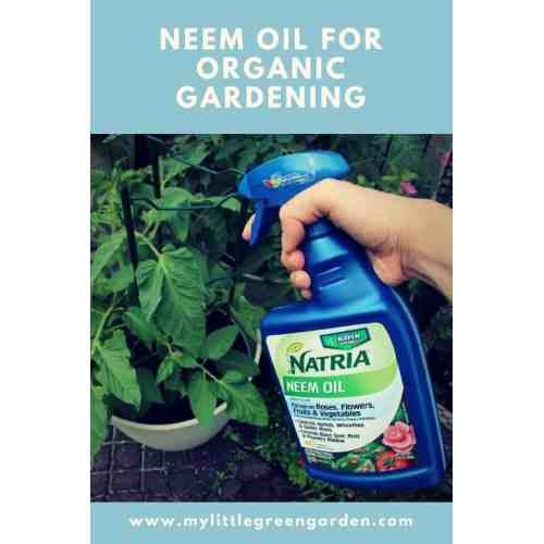 Medium Crop Of Garden Safe Neem Oil