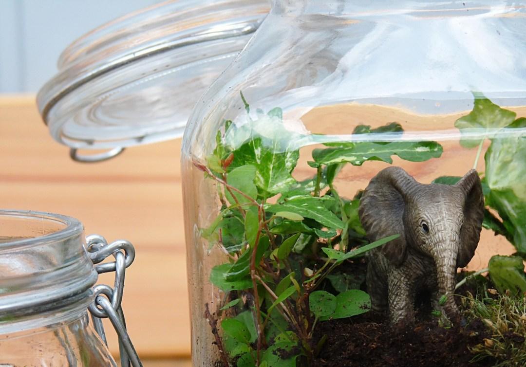 Biosphäre im Glas DIY