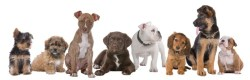How To Buy a Dog In Pakistan Price Pictures and Breed Family Name
