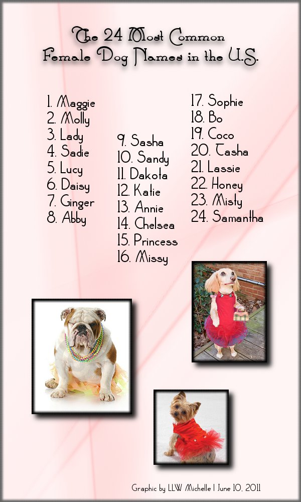 Dog Names For Male Puppies That Start With S