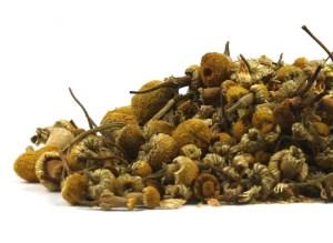 chamomile_22093T-product_1x-1441403347
