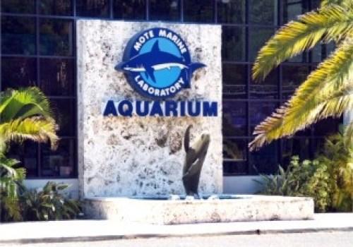 Mote Aquarium mytravelingkids.com