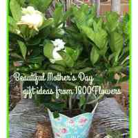 Find that perfect Mother's Day gift at 1800Flowers #ad