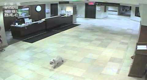 Dog Finds Her Way To The Hospital To Visit Her Mom