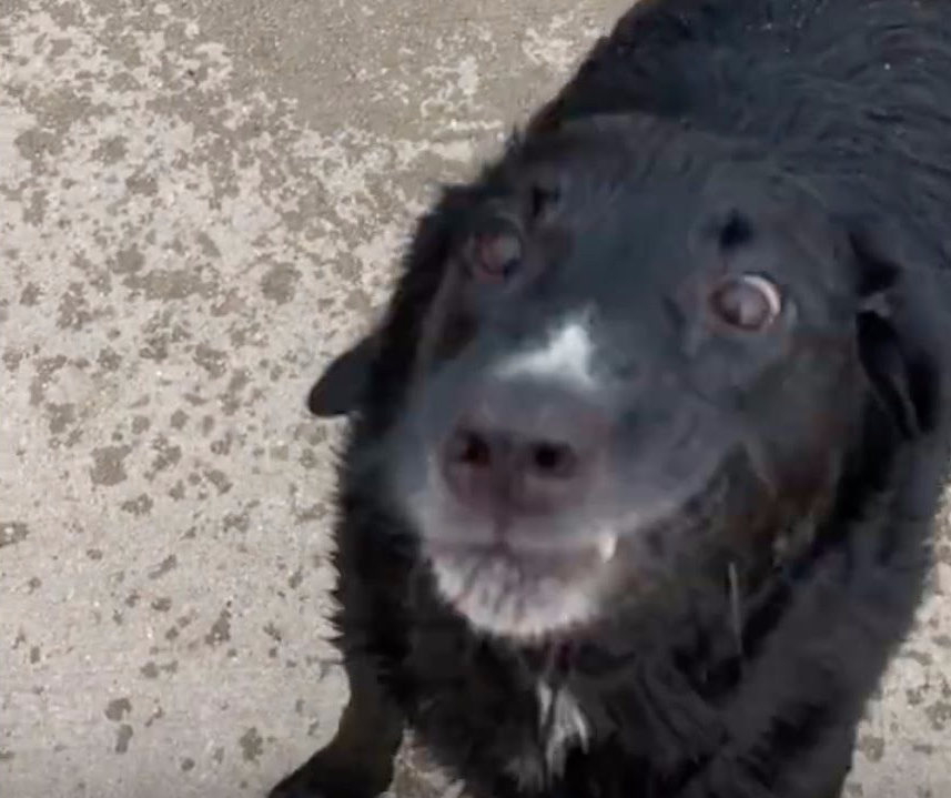 Hilarious Dog Throws Tantrum At Beach