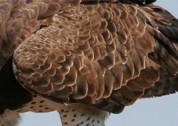 Martial Wings