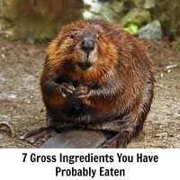 7 Gross Ingredients You Have Probably Eaten