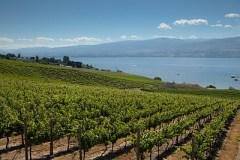 BC vineyards (Image courtesy winebc.org)