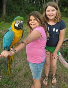 My Parrots and Morals