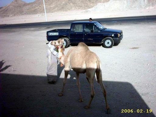 Маленький верблюдик