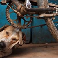 reciclando [11] quem tem medo compra um cão