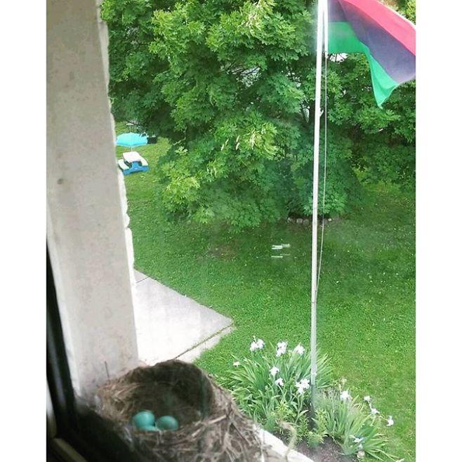 Springtime at the Omowale Republic. The view from the twins' bedroom window. #DecorationDay #MemorialDay #birdnest #birdeggs #rbg #redblackgreen #OmoWonderTwins