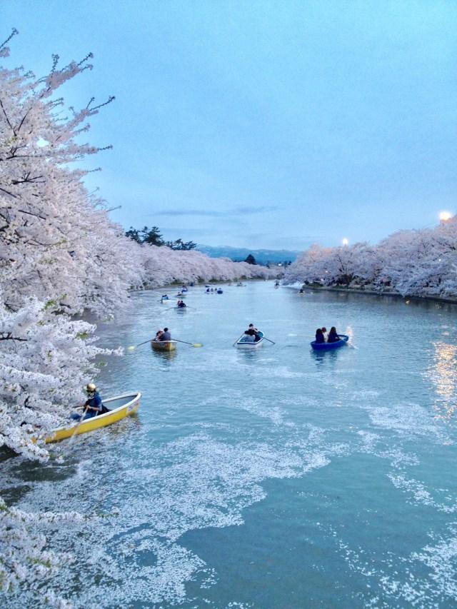 桜満開時の公園