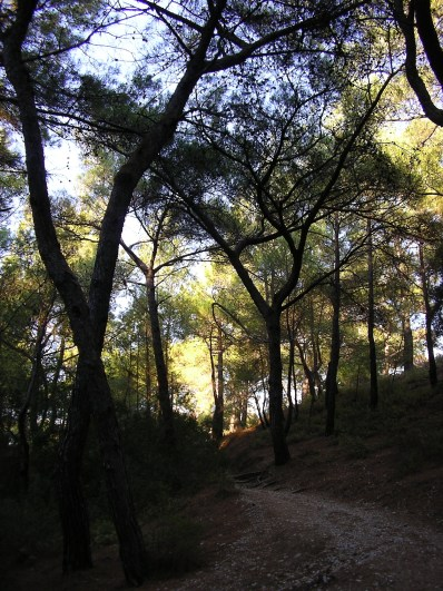 Epta Piges, Path Through Spindly Woods on Rhodes