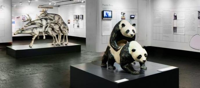 museuseroticos