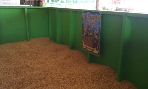 Nashville-Fun-For-Families-Honeysuckle-Hill-Farm-2