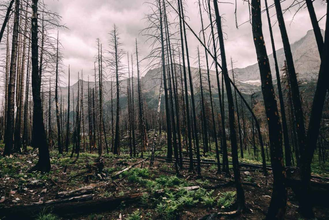 magical_glacier_national_park_burned_forest
