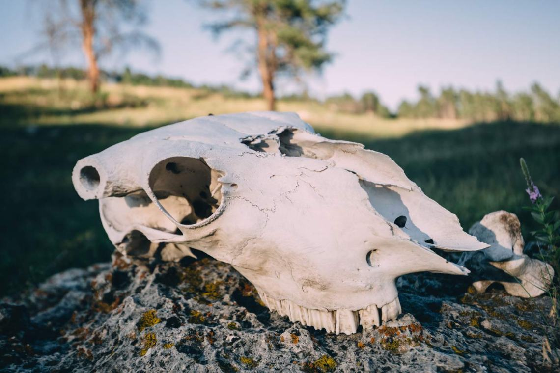 monumental_charms_south_dakota_wind_cave_skull