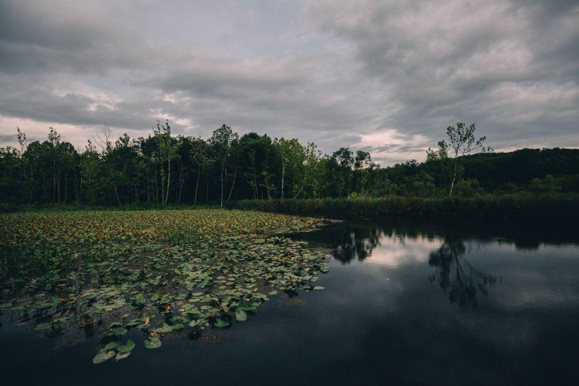 Beaver marsh near Howe Meadow, across the street from the farmer's market.