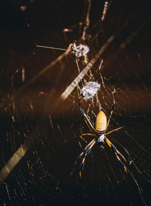 six_creepy_tales_national_park_quest_congaree_spiders