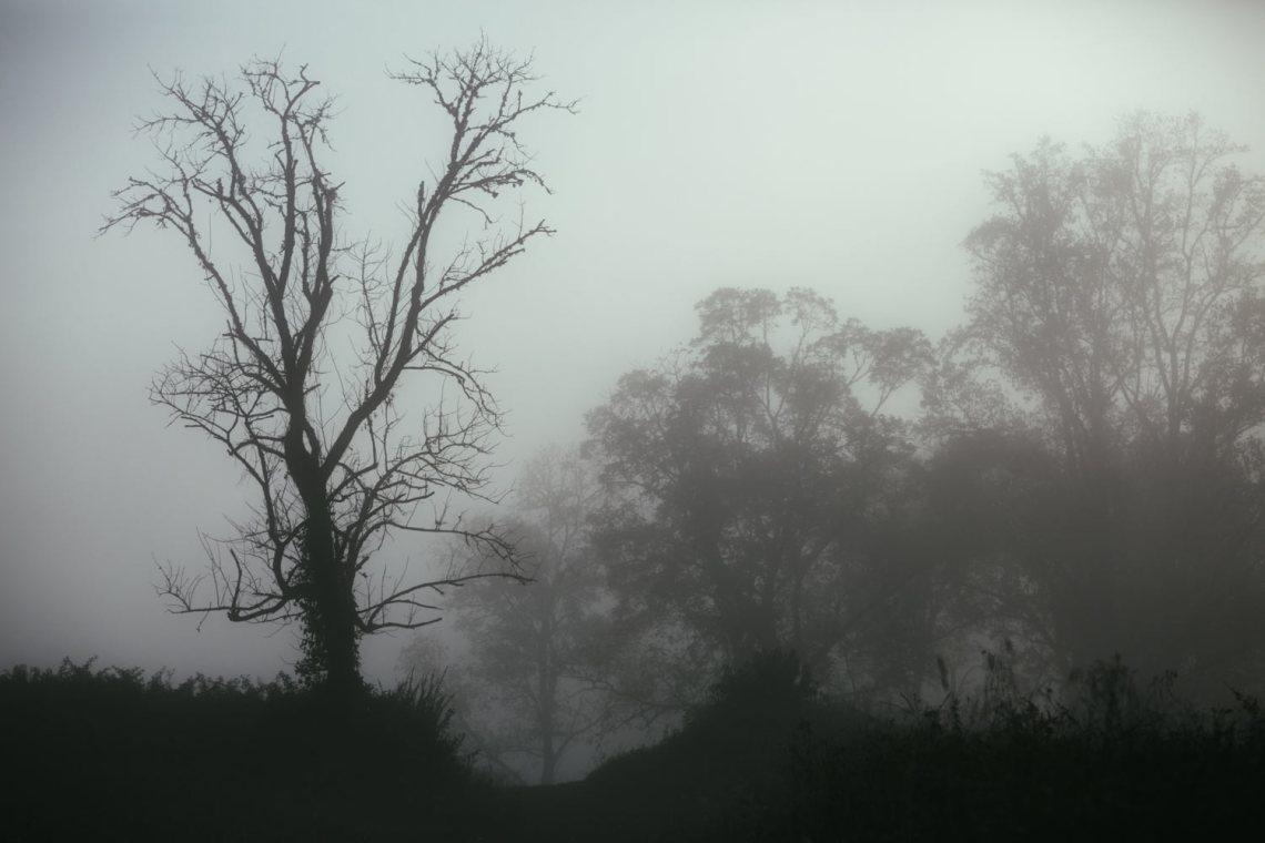 six_creepy_tales_national_park_quest_trees