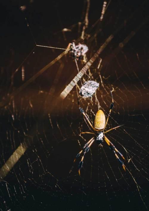 art_of_solitude_congaree_spider