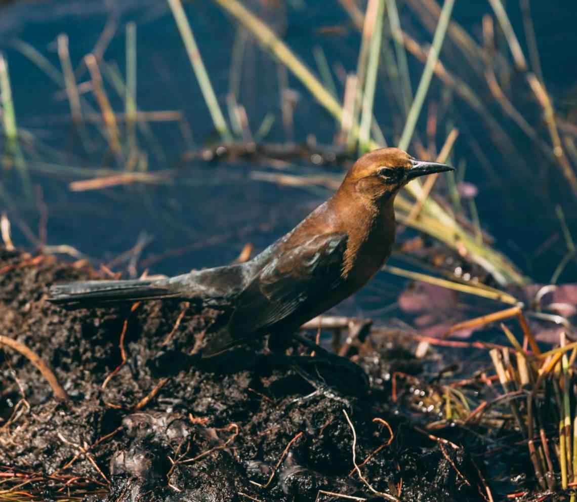letter_for_birds_national_park_quest_1