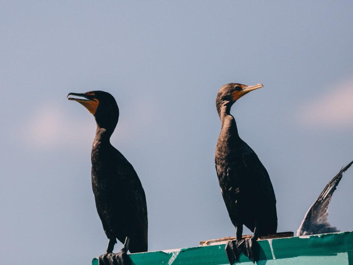 letter_for_birds_national_park_quest_birds_2