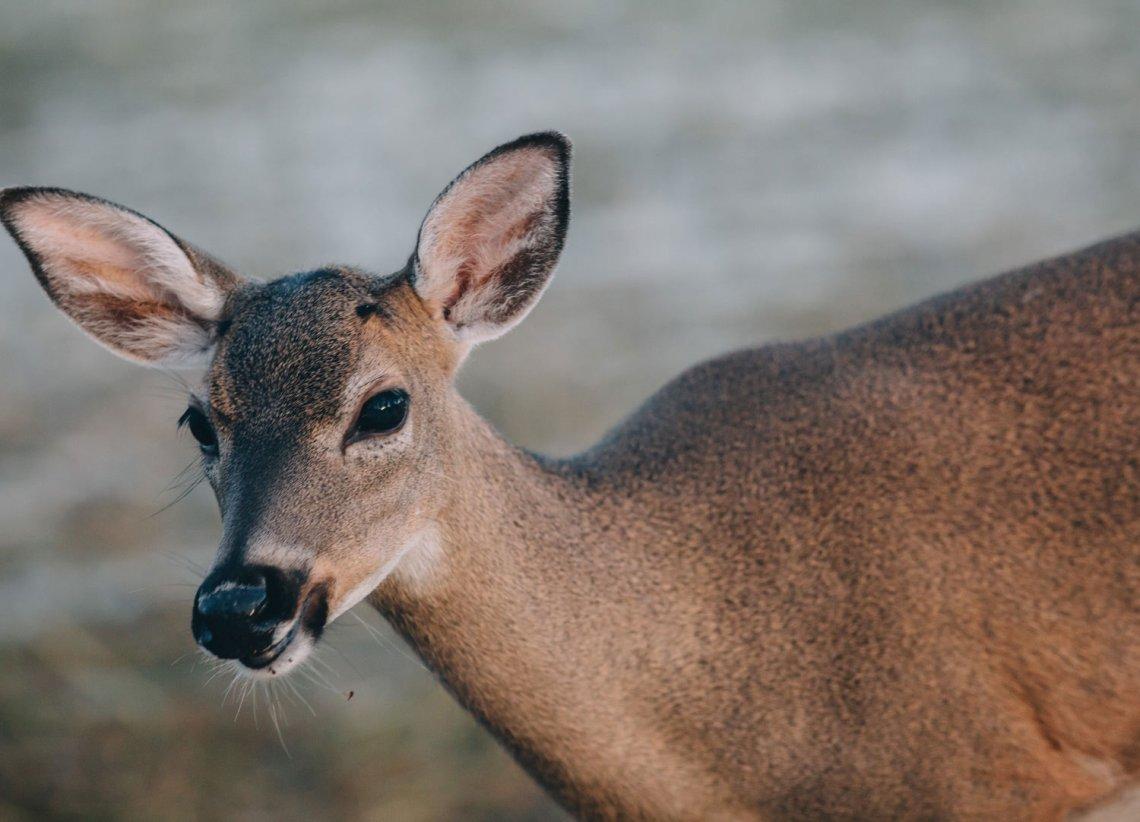 key_deer_national_park_quest