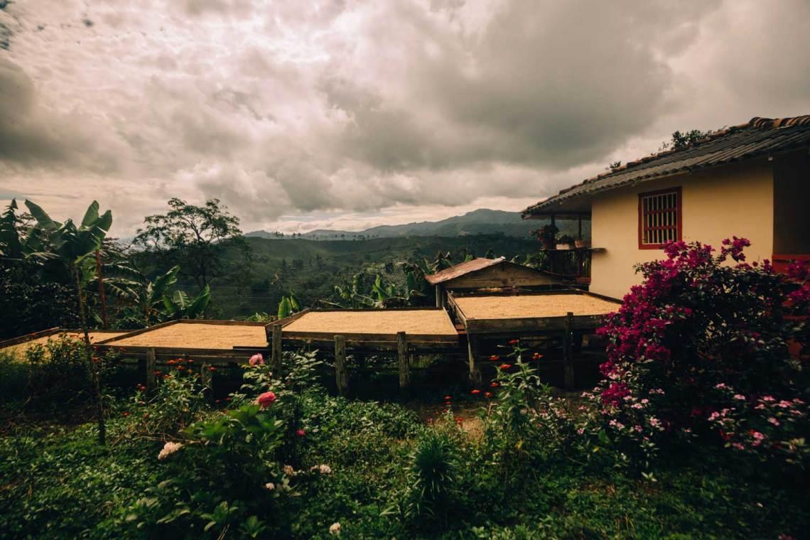 colombia_coffee_break_farm