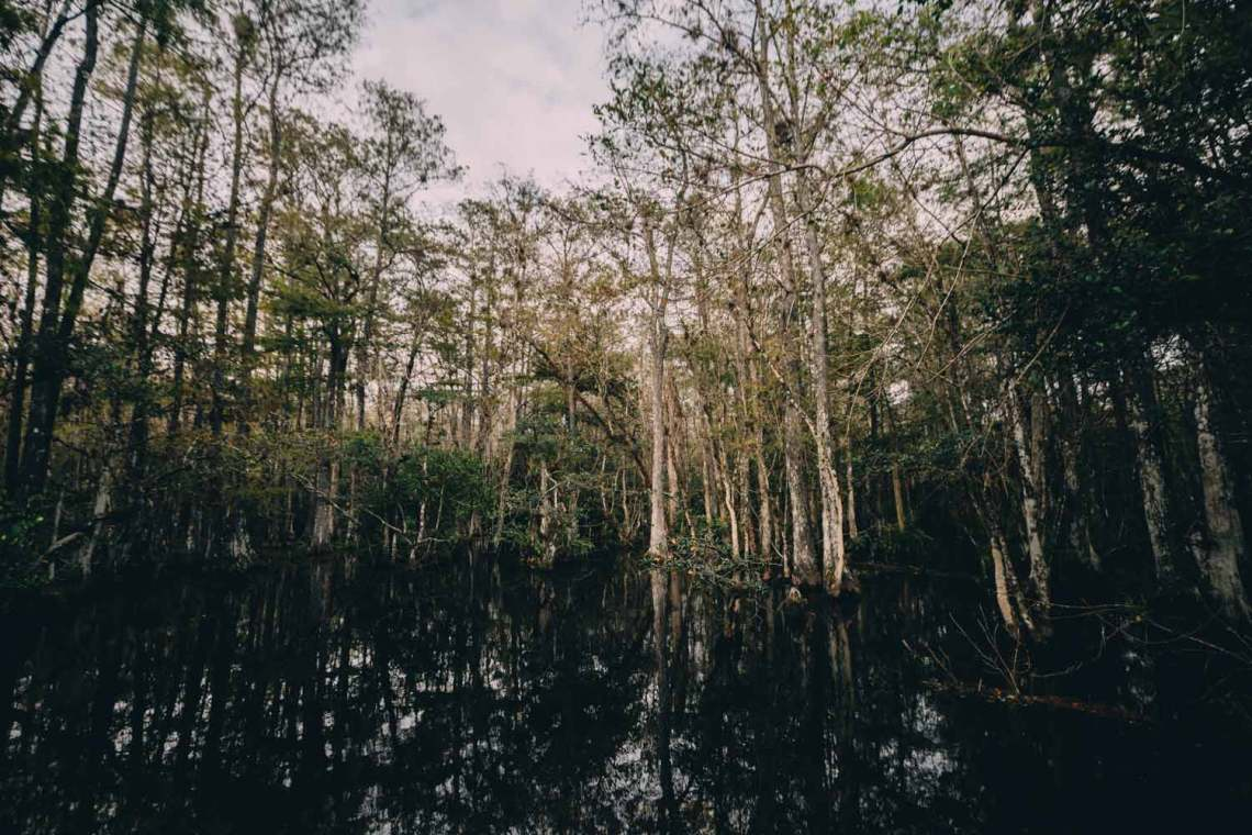 pirates_who_haunt_everglades_woods