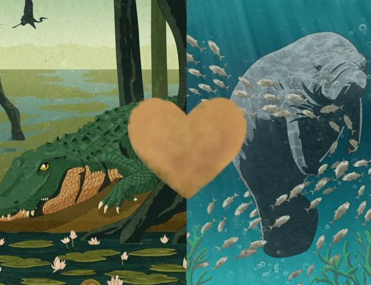 manatee_alligator_love_story_cover_heart