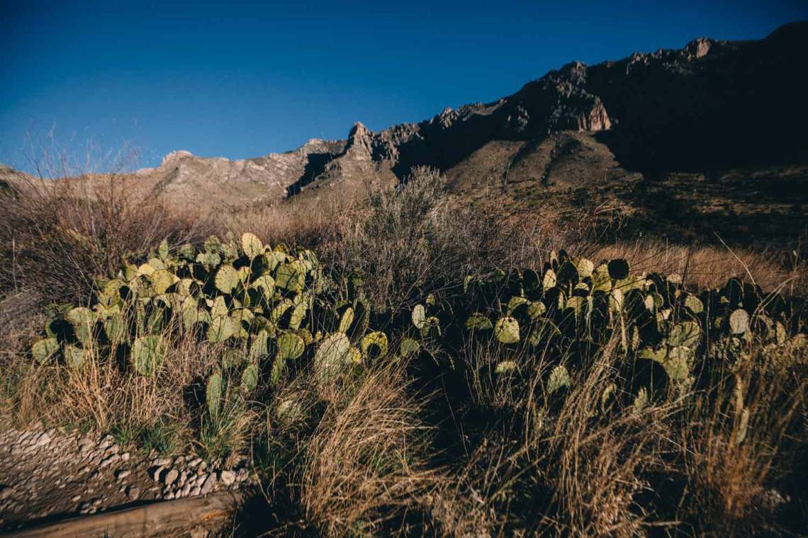 art_of_guadalupe_mountains_quest_devils_hall_trail_prickly_pear