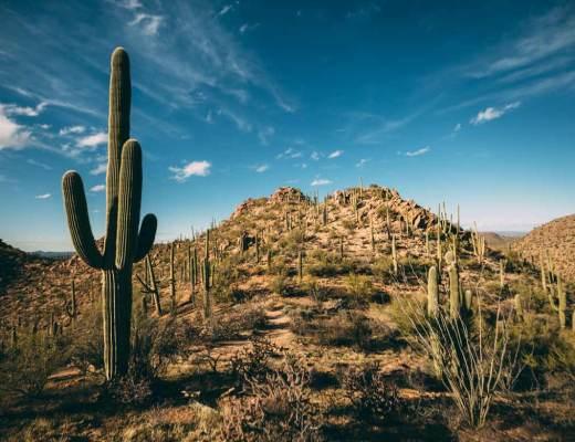 art_of_saguaro_national_park_cactus_cover