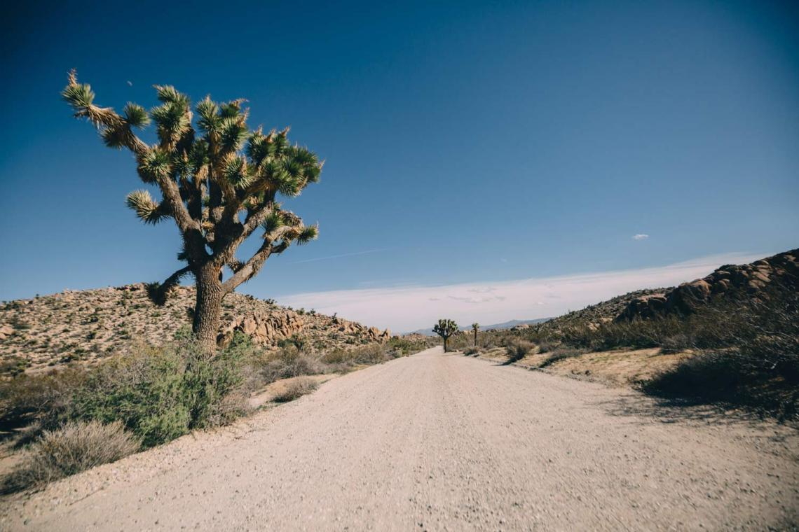 joshua_tree_meaning_road