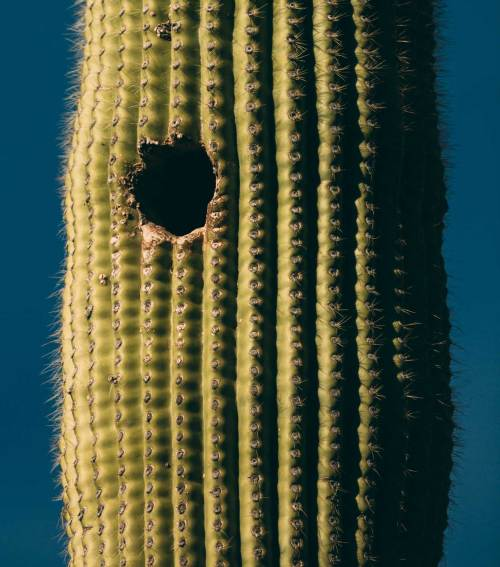 reflection_land_saguaros_national_park_saguaro_hole