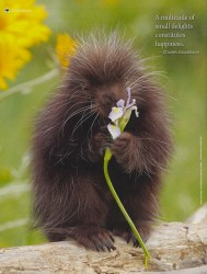 Cover of 2015 June/July Mother Earth News