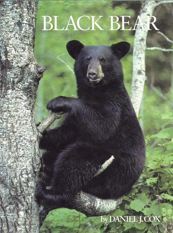Cover of Black Bear
