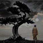 bonsai-moon