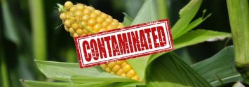 "GMO Imports Causing Unapproved ""Mystery GMO Plants"" to Invade Ecosystems"