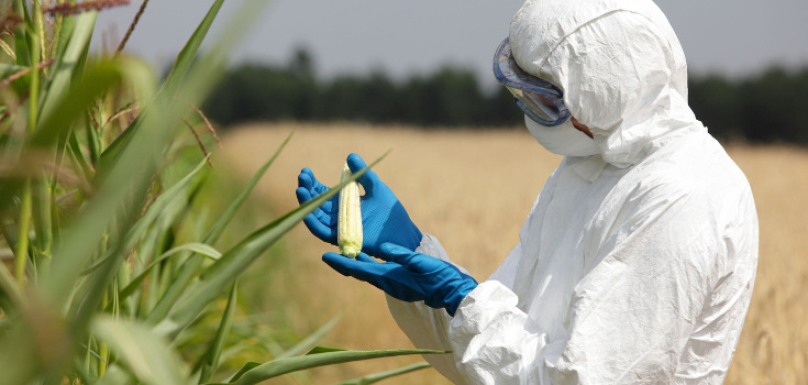 Experts Call for Review of GMO Crops Upon Recent Pesticide-Cancer Link