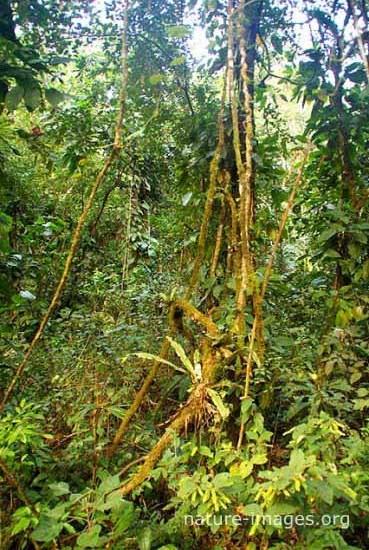 rain forest scene Panama
